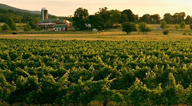 doukenie winery loudoun