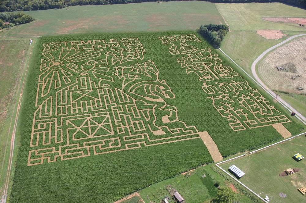 Temple Hall Corn Maze