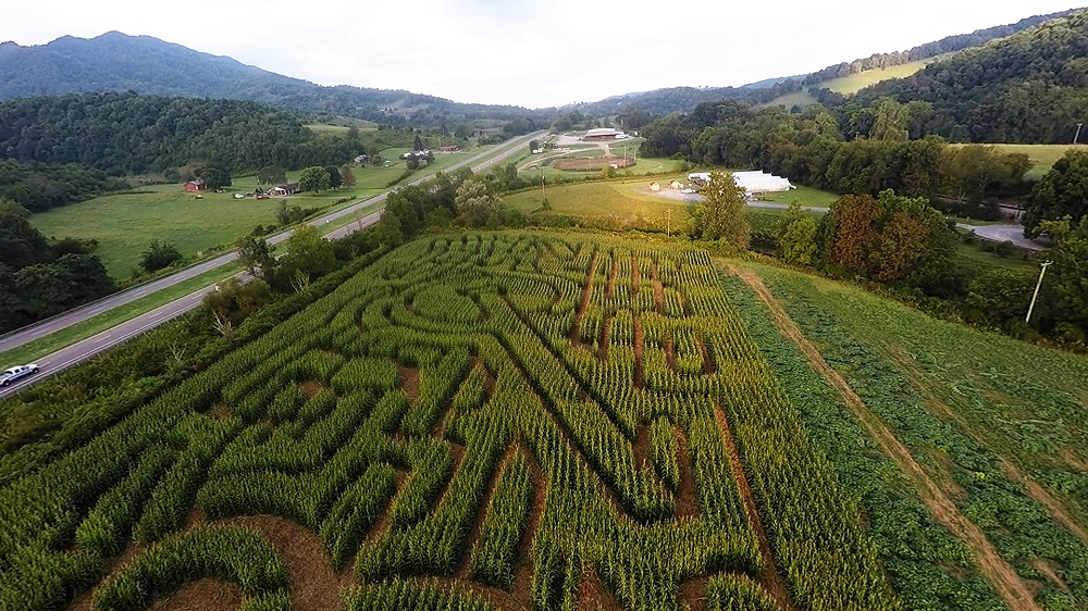 Historic crab orchard corn maze