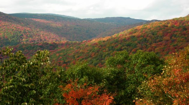 Five Ideas for a Memorable Fall Vacation in Virginia