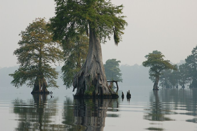 Great Dismal Swamp