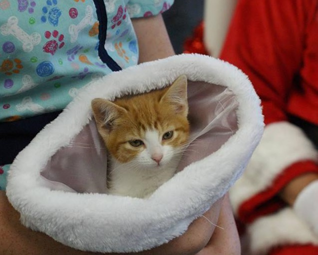 spca pictures with santa cat in hat