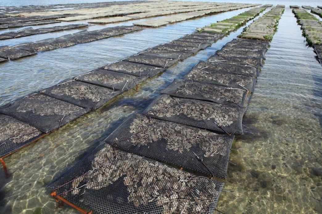 A shellfish farm