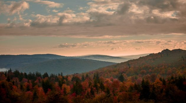 The Top Spots to View Virginia's Colorful Foliage Throughout the Fall