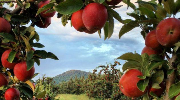 8 Reasons Why We LOVE Fall in Virginia